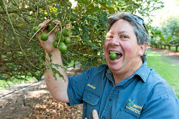 THE FUN ONE: Anthony Mammino, pictured on his macadamia farm, was