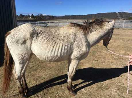 The two horses were found in this state by veterinarians on August 5, 2016.