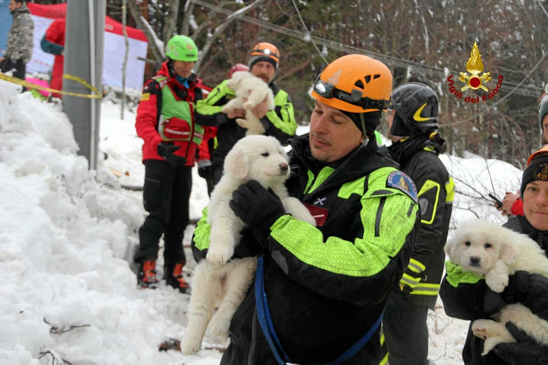 Rescue team members carry the three puppies found alive in the rubble of the avalanche-hit Rigopiano Hotel in Abruzzo, Italy. The puppies were said to be in good health after almost five days buried in freezing snow.