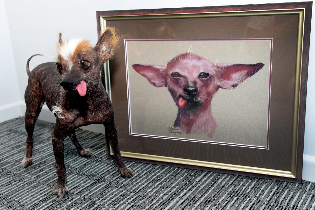 John Magor's Chinese crested Ko-ko, has posed for artist Maxine Thompson.