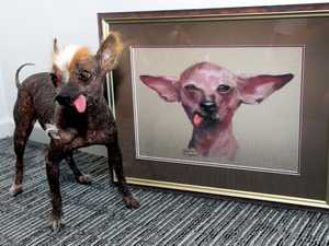 World's ugliest dog immortalised in artwork