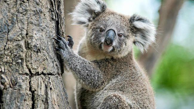 The Koala Markets are run by the Koala Social and Sporting Club of Hervey Bay.