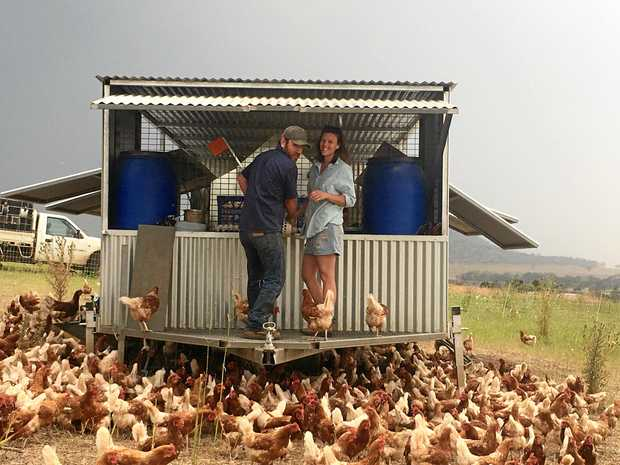 Randal and Juanita Breen started Echo Valley Farms, a holistic farming business with free range chickens, pigs and a brangus stud.
