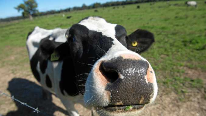 Toowoomba will host the first of the ACCC's dairy inquiry sessions.