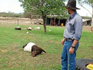 Goat beheaded in bizarre attack