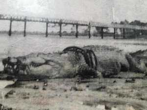The mystery of this monster crocodile
