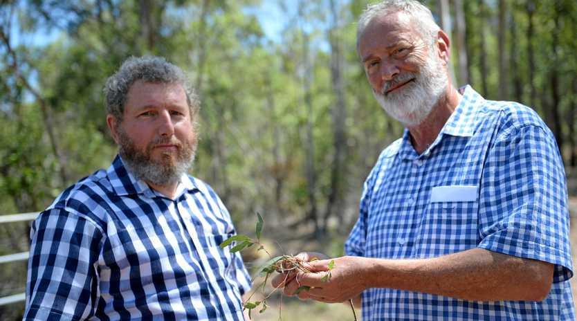 Koala: Ian Dunn and Dr Alistair Melzer at Nankin.