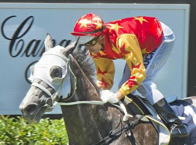TOO GOOD: Jockey Brad Stewart rides Helarocity to victory at Clifford Park on Sunday.