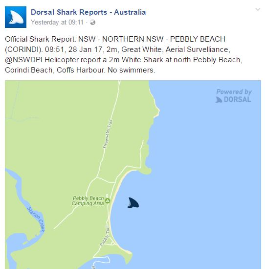 There have been 13 shark sightings made by aerial and drone patrols of Mid North Coast and North Coast beaches over the past 24 hours.