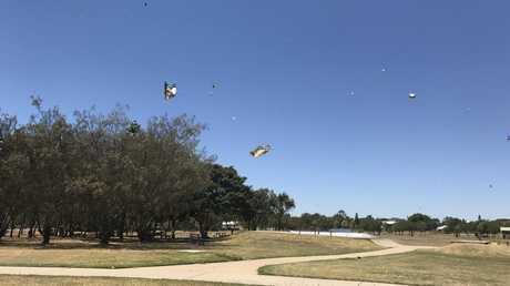 Thousands upon thousands of butterflies at Burnett Heads.