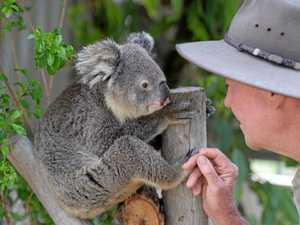 Cuteness overload: It's a koala on scales