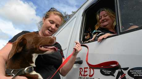 RESCUED: Tracey Amos and Sharyn Banks from Red Collar Rescue make it their business to resuce animals from neglect and from being killed.
