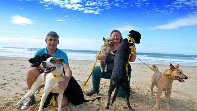 Jason Smith and Sharyn Banks with some rescue dogs.