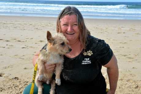 Red Collar Rescue founder Sharyn Banks.