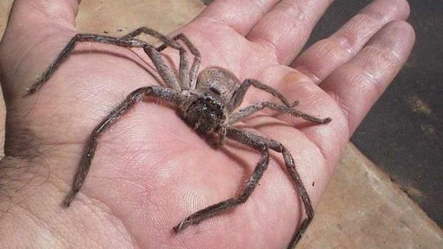 A Toowoomba woman has called on people to stop killing spiders.