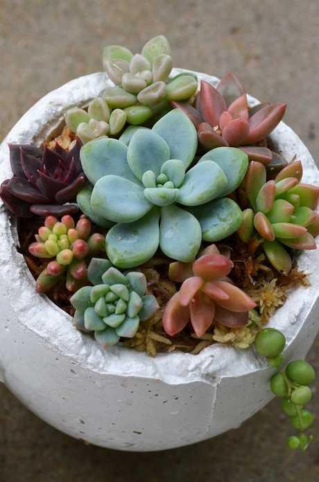Succulents grown by Amanda Meng.