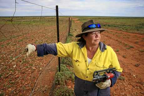 Phyllis Ainsworth monitors and maintains the dingo-proof fence.