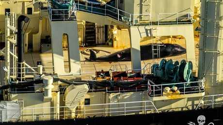1770 LARC! Tours Skipper Wyanda Lublink on the MV Steve Irwin for Sea Shepherd.