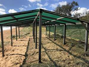 Severe heat takes toll on turtles: shelter erected