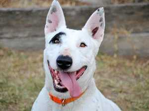 10 pets that need your love at Gympie RSPCA