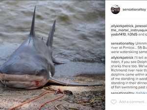 Bull shark caught off tinnie