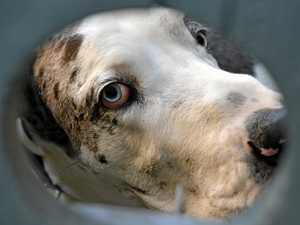 Good dog! Police say pet scared off would-be burglars