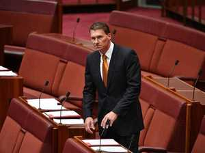 Bernardi announces intent to 'build a conservative movement'