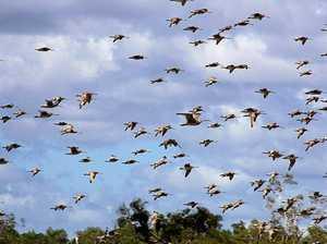 Figures show bird strikes on rise