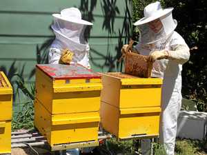 The chance to learn art of beekeeping