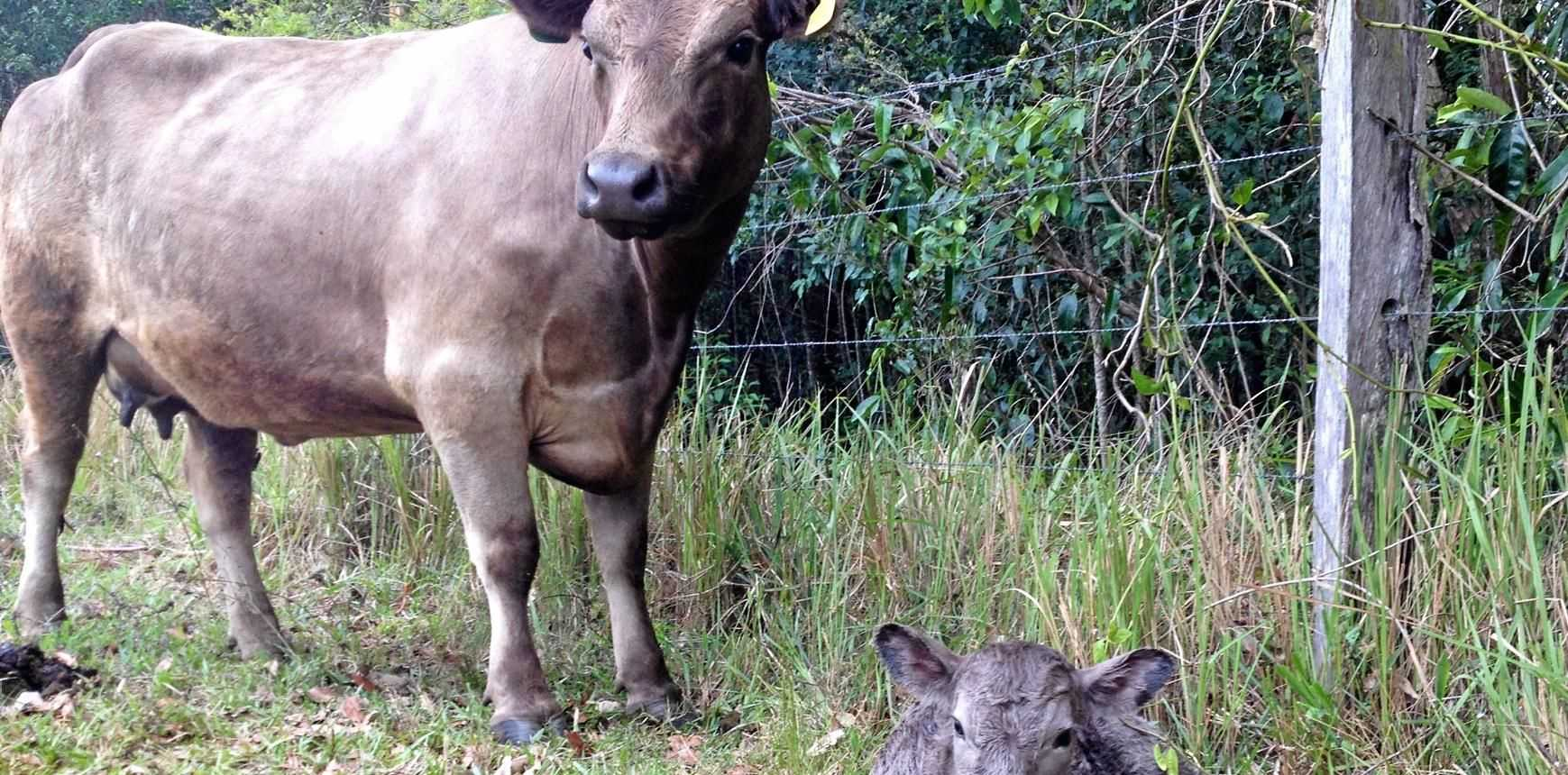 GOOD TEACHERS: Maloo and her mother Cookie in the agricultural classroom at Noosa District State High School.