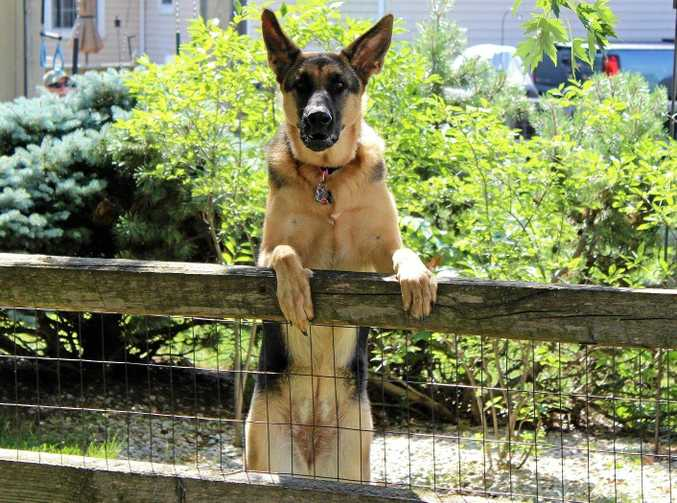 Marian police are looking into suspected dog baiting in the area, but are having trouble finding solid evidence.