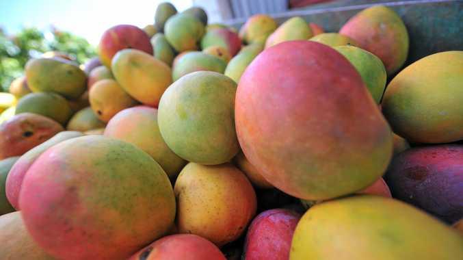 Jayfresh Australia has put three Bowen mango farms on the market.