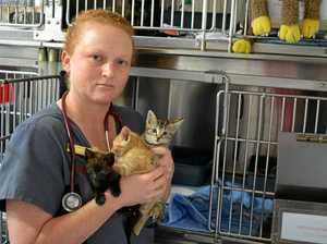 'Please stop feeding our feral cat problem'