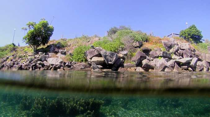 Shaws Bay: One of the best little snorkelling spots on the Northern Rivers. Photo Contributed
