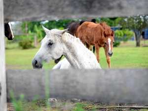 Heavy fines for neglectful horse owners