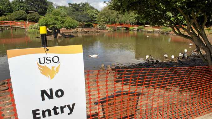 ALGAE CONCERN: The USQ Japanese Garden is experiencing the growth of blue-green algae blooms, with parts blocked off.