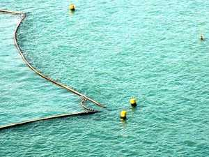 Shark nets to be removed early