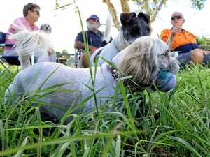 Residents: 'Grass, prickles are hurting our dogs'