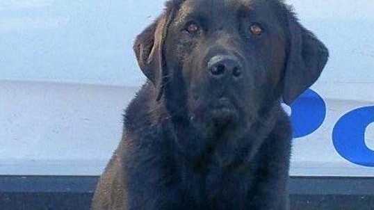 PAWS ON PATROL: Doug the Drug Detection Dog.