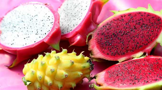 Dragon fruit, or Pataya, originally came from central America. Photo Tessa Mapstone / South Burnett Times