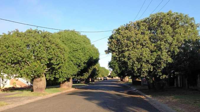 Bottle trees line Robinson Avenue in Grafton.