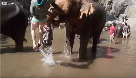 A tourist finds out the hard way about trying to wash an elephant.