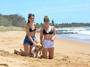 Kangaroo hits the beach for hop and skip with the girls