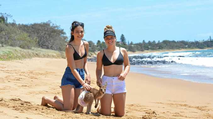 SKIPPY: Riley Castell and Emily Richardsi take Bob the roo for a skip along Archies Beach at Bargara.