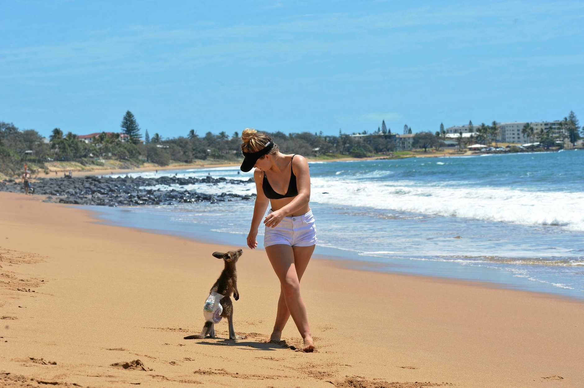 SKIPPY: Emily Richards takes Bob the roo for a skip along Archies Beach at Bargara.