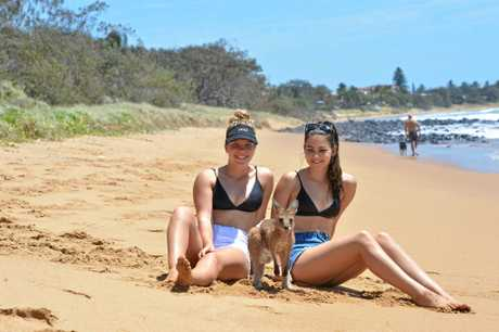 Emily Richards and Riley Castelli take Bob the roo for a skip along Archies Beach at Bargara.