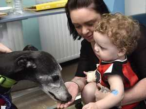 Furry friend visits kids in hospital