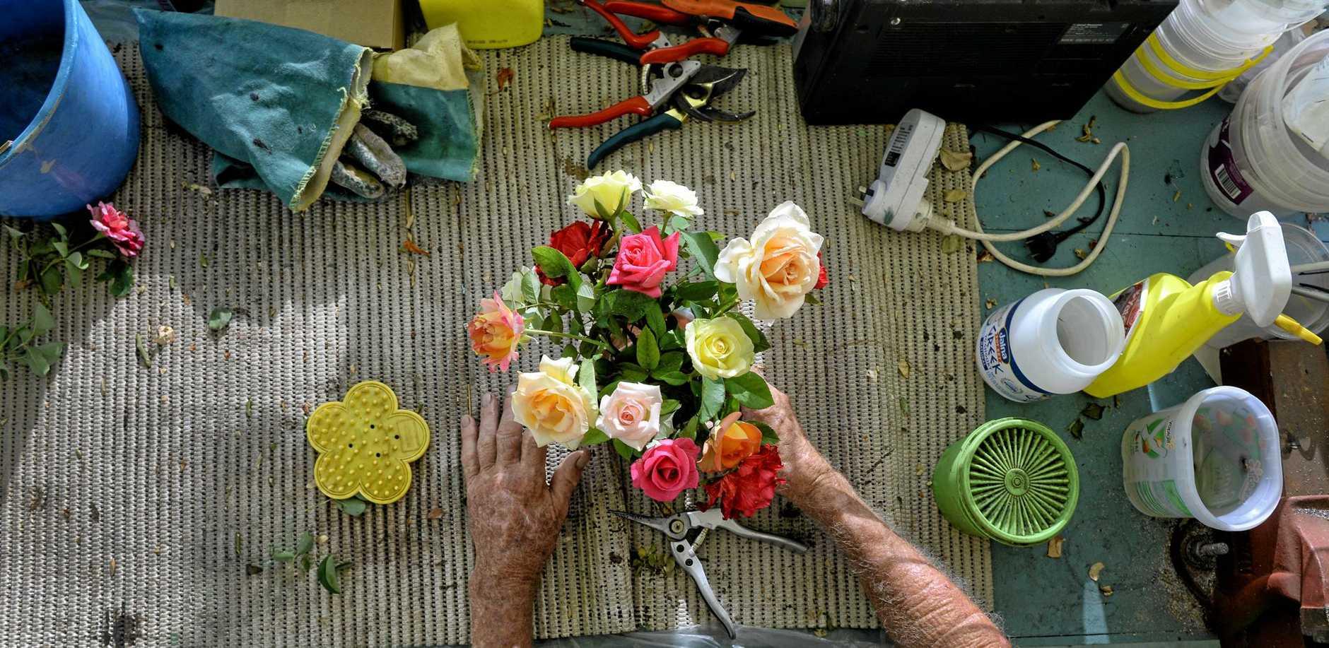 Cec Gleeson loves growing roses.