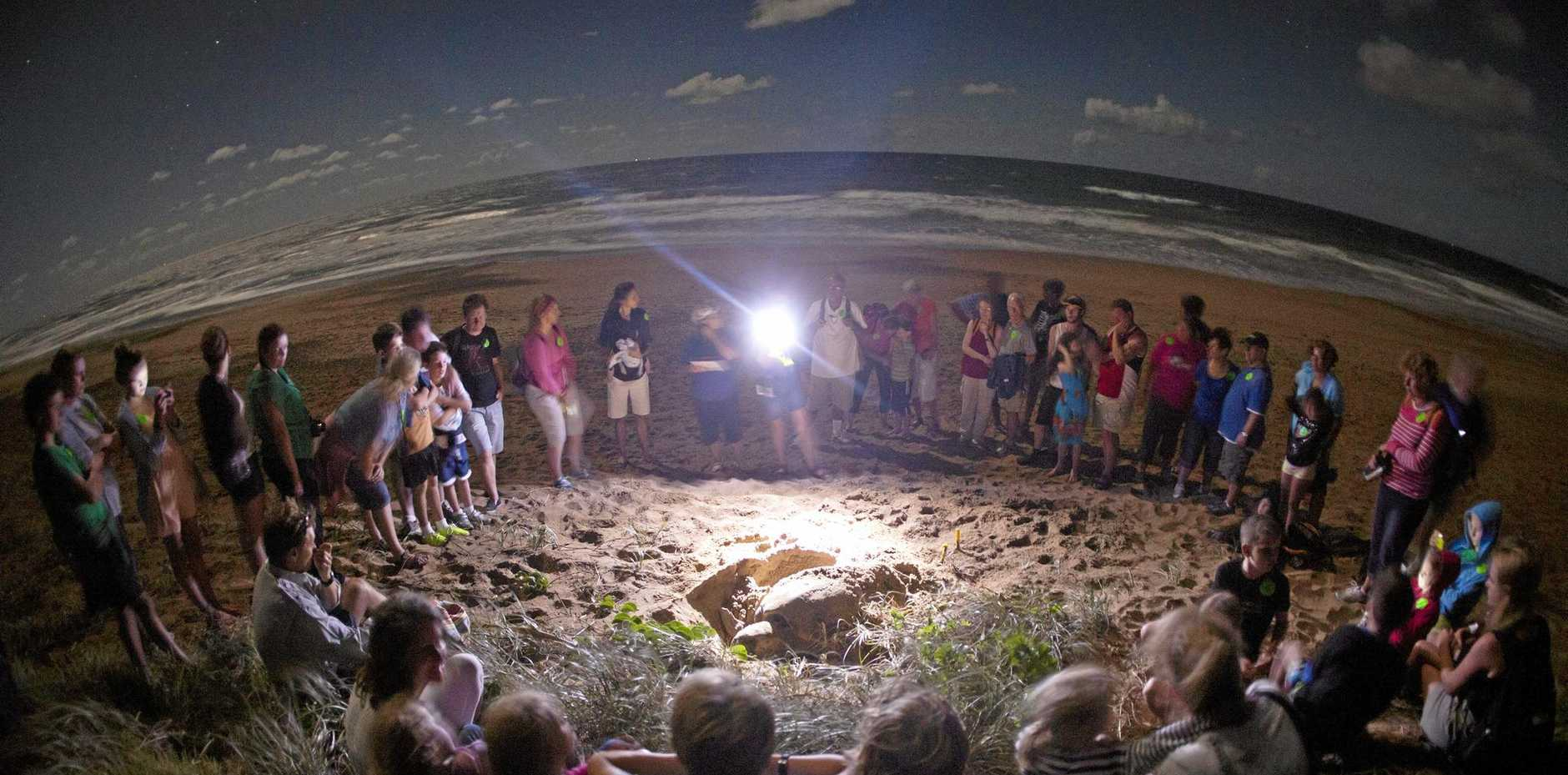 TOURIST ATTRACTION: Visitors to Mon Repos get to experience the wonder of loggerhead turtles laying their eggs.