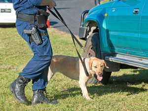 Drug dog at Byron nets five arrests in one hour